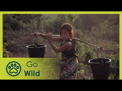 Nature - Southeast Asia at its best. 85% of the country is untouched nature, widespread forests, steep mountains and wide river valleys, but also cool high plateaus a...