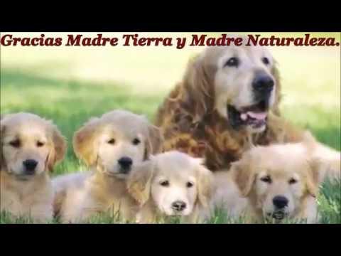 Video Bendicion de Tu Madre download in MP3, 3GP, MP4, WEBM, AVI, FLV January 2017