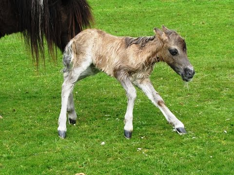 New Born Foal   Roydon Woods from Boldre Church round | the new forest  Walks