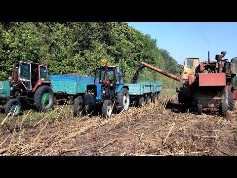 Уборка подсолнуха 2017 ЛГ 5580  Эксперимент с Микроэлементами СельхозТехника ТВ - DomaVideo.Ru