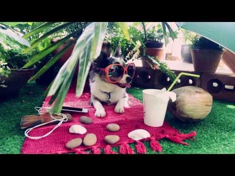 Чихуахуа Софи рассказывает как перевезти собаку в самолете