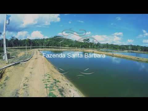 Fazenda Santa Bárbara - Campo Novo de Rondônia  RO