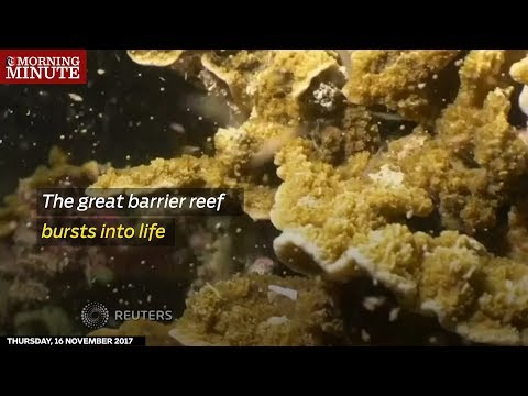 The Great Barrier Reef showcased its annual spawning last week.
