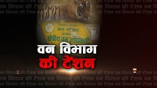 Sariska India  city photo : Tiger killed by villagers in Sariska Park by giving poison | First India News Rajasthan