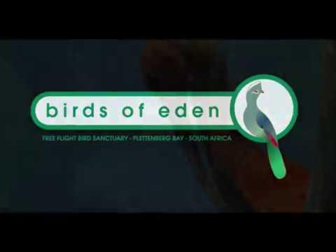 Bird of Eden - a fantasy world on the Garden Route