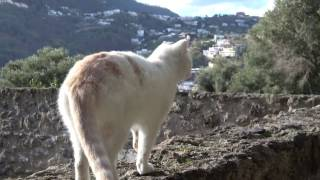 Breve test in 4k a Ischia, nello splendido castello Aragonese Telecamera: Sony AX53