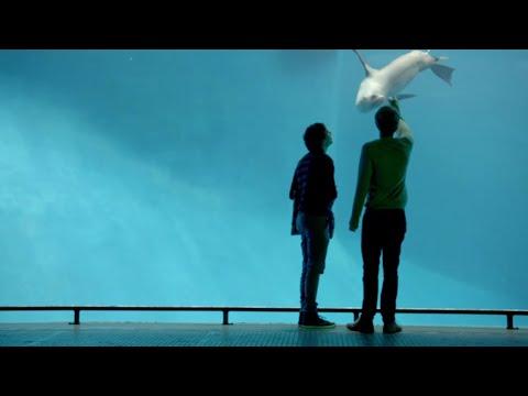 Lapin La Cocotte | Please Like Me | Season 2 Episode 6