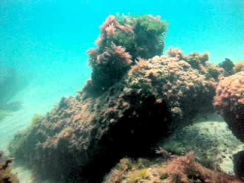 buceo en Mioño 21-05-2010