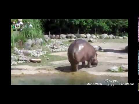 Mena getting fucked 👌👈💦 18+ (видео)