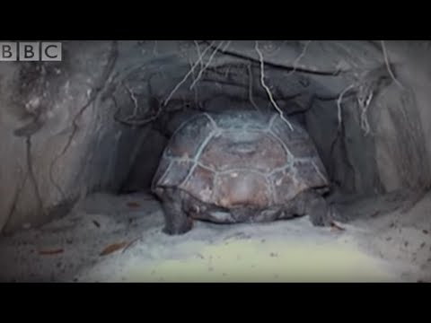 Attenborough: The Wonders Of Tortoise Tunnel | Bbc