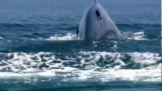www.srilanka.travel/ https://www.facebook.com/Awesome.SriLanka Spotting blue whales in Sri Lanka.