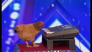 Szczena opada! Kurczak Jokgu, który potrafi grać na keybaordzie!