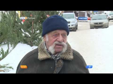 Специалисты Россельхознадзора проверяют волгоградские елочные базары
