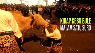 Video PLESIRAN : Kirap Kebo Bule Malam Satu Suro MP3, 3GP, MP4, WEBM, AVI, FLV Oktober 2017