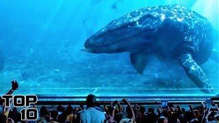 Video Top 10 Extinct Animals We Shouldn't Bring Back To Life - Part 2 MP3, 3GP, MP4, WEBM, AVI, FLV November 2018