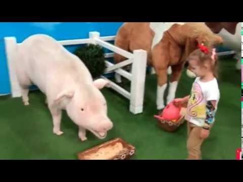 Гладим животных играем на детской площадке в магазине игрушек Кidswill shоррing Мiss Кату - DomaVideo.Ru