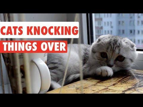gatti-che-fanno-cadere-oggetti