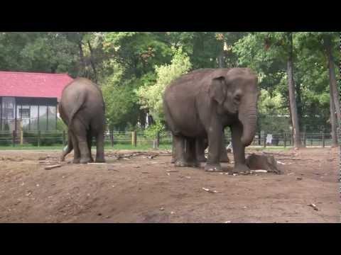 Nyiregyházi Állatpark  VideoZOO 2012 ősz