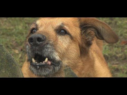 Hundeangriffe: Warum Hunde manchmal aus heiterem Himmel beißen