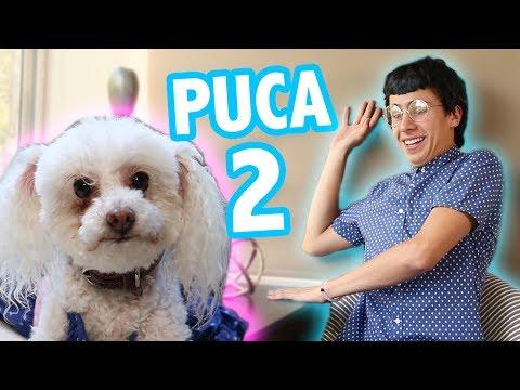 ENTREVISTA A PUCA 2 ft. Rix / Juanpa Zurita