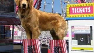 Prostitute Dog On Vibrating Stilts