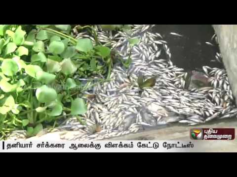 TNPCB-arise-notice-to-private-sugar-mill-for-the-reason-of-Thousands-of-Fishes-died