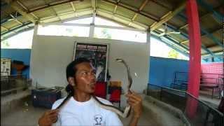 Snake Show - Koh Samui - Thailand