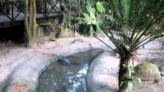 Ban Keun Laos  city pictures gallery : Ban Keun Zoo in Laos