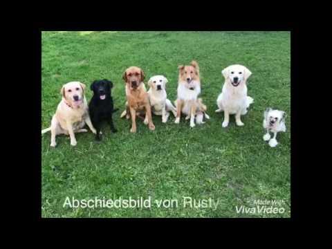 Lars & Autismusbegleithund Rusty
