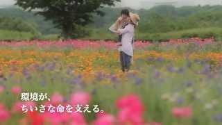 平塚市プロモーション映像「ちいさな命」編