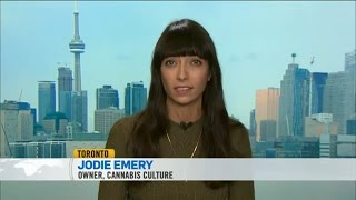 CTV Liberal Task Force on the Legalization of Marijuana with Jodie Emery by Pot TV