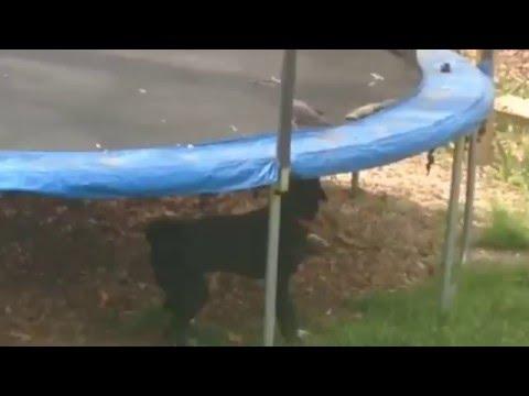 Dog helping a bird enjoy the Trampoline