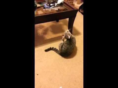 Da pukneš od smeha, mada maci nije bilo ni najmanje zabavno