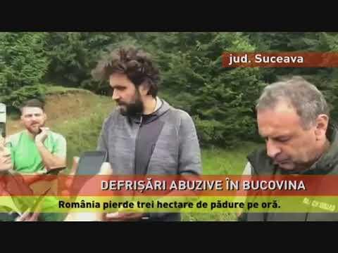 Greenpeace susține că se fac defrișări ilegale, în Bucovina