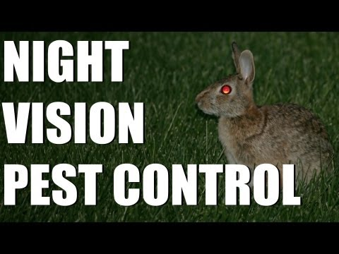 pest control - Ever wondered how much damage wild rabbits can do and what you can do to control them? We're with Somerset farmer Richard Payne using N550 night vision and a...