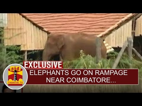 Exclusive--Elephants-go-on-Rampage-near-Coimbatore-Thanthi-TV