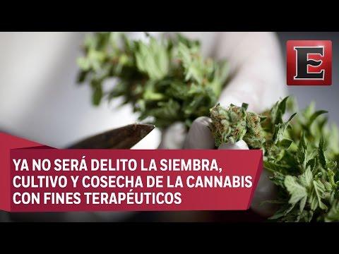 Diputados aprueban el uso de la mariguana con fines medicinales