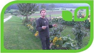 Peters Obst und Beeren Begleitpflanzen
