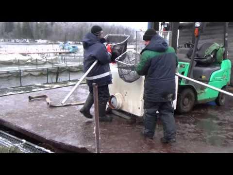 Видео отчет о поездке за финской форелью и зарыблении водоема 18.12.2015