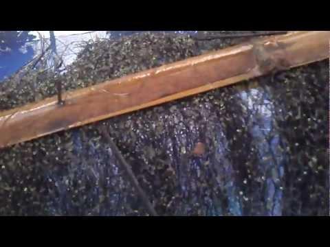 Persiapan Penetasan Telur Ikan Lele