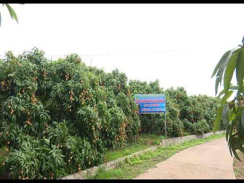 Chung tay cùng Bắc Giang tháo gỡ khó khăn trong tiêu thụ nông sản