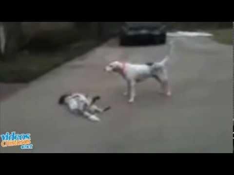 Los mejores Vídeos Chistosos - Capítulo 3