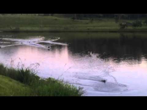 O ENCANTADOR DE GANSOS (The Geese lovely)