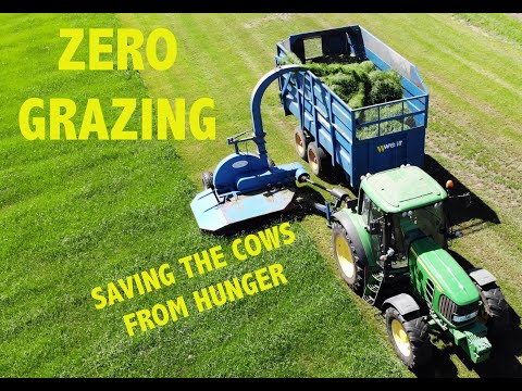 EPISODE 8 ZERO GRAZING - The job thats saving the cows from hunger!