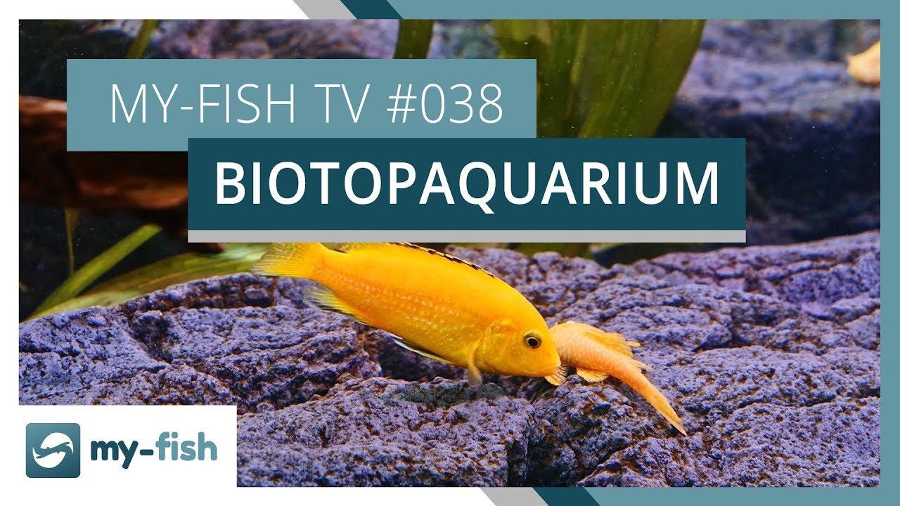 my-fish TV - Deine Nr. 1 Anlaufstelle für alle Themen rund um die Aquaristik 26
