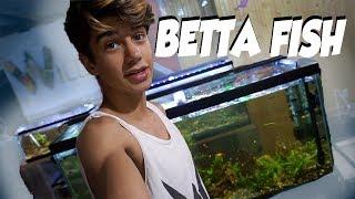 HUGE BETTA FISH SORORITY!!! by  Challenge the Wild