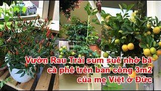 Vườn Rau Trái sum suê nhờ bã cà phê trên ban công 3m2 của mẹ Việt ở ĐứcVườn Rau Trái, vườn rau, làm vườn rau, cách làm vườn, trồng rau làm vườn, làm vườn ở ĐứcTheo vnexpress.net
