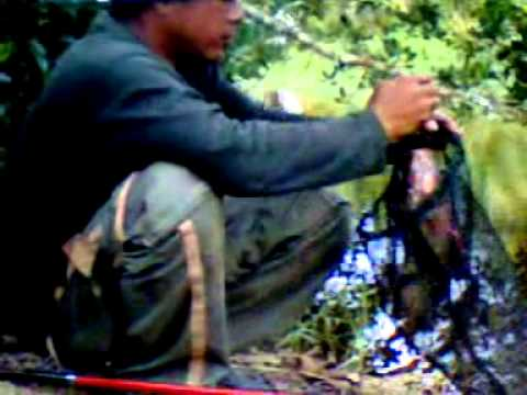 mancing nila sungai itik