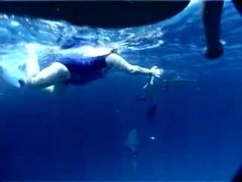 Delfines y tiburones