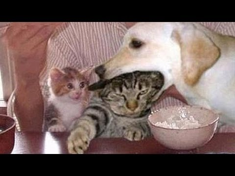 cute cats - We saw you liked our compilation 'Cats annoying dogs', so we made a new one, 'Dogs annoying cats'! So now you can see that dogs can also be annoying sometime...